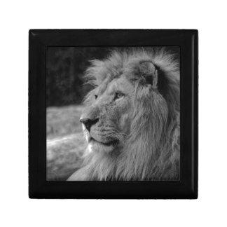 Black & White Lion - Wild Animal Gift Box