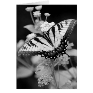 Black & White Monarch Butterfly  Card