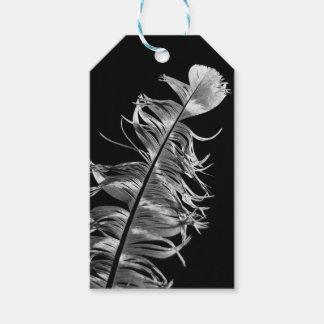 Black & White Photographic Feather Art