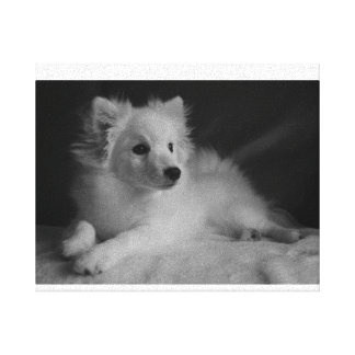 Black & White portrait Japanese Spitz Canvas Print