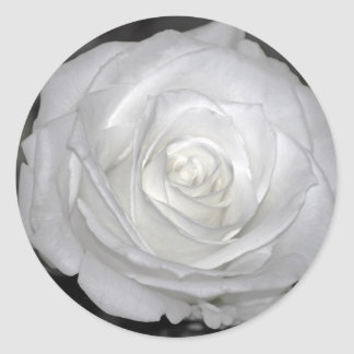 Black & White Rose Round Sticker