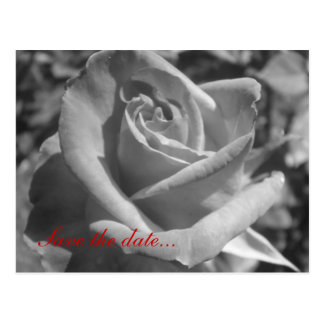 Black & White Rose Save the Date Post Cards
