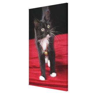 Black & white short-haired kitten, 2 1/2 months canvas prints