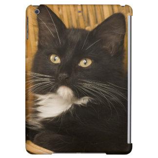 Black & white short-haired kitten on hamper lid,