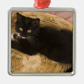 Black & white short-haired kitten on hamper lid, 2 Silver-Colored square decoration
