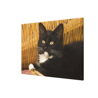 Black & white short-haired kitten on hamper lid, stretched canvas print