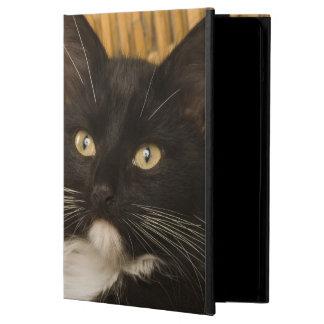 Black & white short-haired kitten on hamper lid, iPad air covers