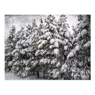 Black & White Snowscape, Conifer, CO Postcard