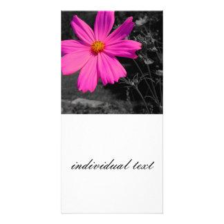 black&white&splash pink blossom photo card