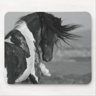 Black & White Stallion Strikes Wild Horse Mousepad