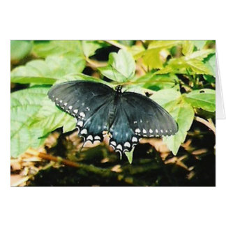 Black White Swallowtail Butterfly Photo Cards