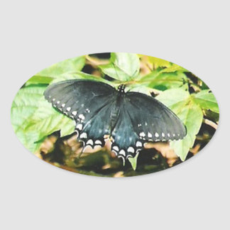 Black White Swallowtail Butterfly Photo Stickers