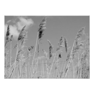 Black White Swamp Weeds in the Wind Poster