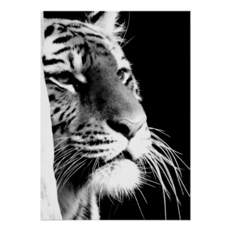 Black & White Tiger Eyes Poster