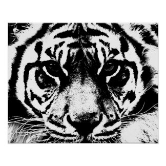 Black White Tiger Eyes Poster Print