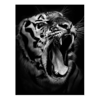 Black & White Tiger Inspirational Postcard