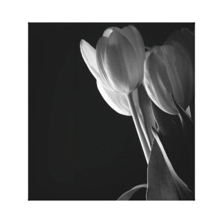 Black & White Tulips Gallery Wrapped Canvas