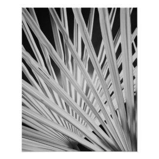 Black & White view of palm tree fronds Poster