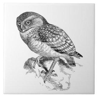 Black white Vintage owl home decor tile