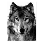 Black & White Wolf Portrait