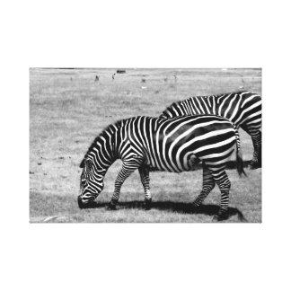 Black & White - Zebra - Canvas