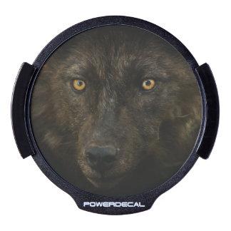 Black Wolf Wildlife Designer LED Window Decal