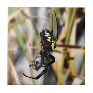 Black & Yellow Argiope Garden Spider Ceramic Tile
