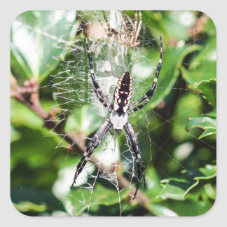 Black & Yellow Argiope Garden Spider Sticker