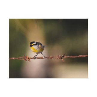 BLACK,YELLOW WHITE BIRD PARDALOTE ON FENCE STRETCHED CANVAS PRINT