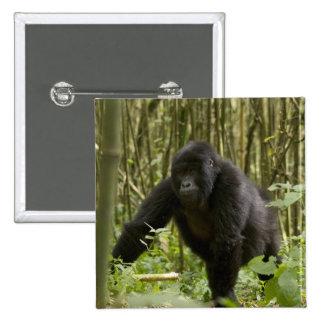 Blackback walking through bamboo forest 15 cm square badge