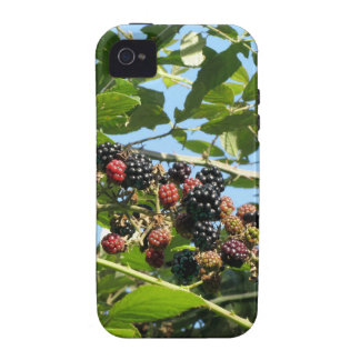Blackberries bunch not yet fully ripened iPhone 4/4S case