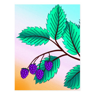 Blackberries on a branch postcard