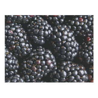 Blackberries Postcard