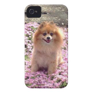 BlackBerry Bold Case Pomeranian Pink Flowers