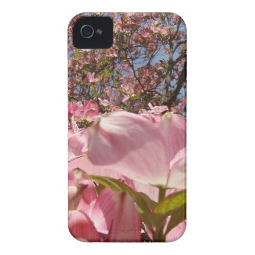 Blackberry Bold cases Pink Dogwood Flowers nature