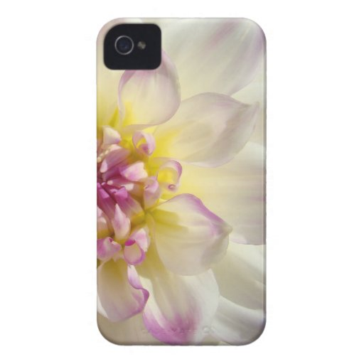 Blackberry Bold cases White Pink Dahlia Flowers