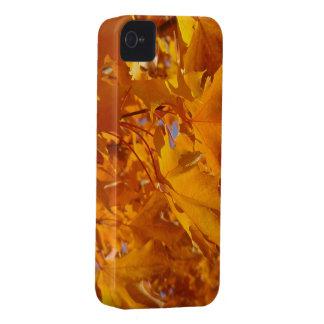 Blackberry Bold covers Golden Orange Autumn Leaves