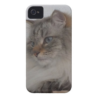 Blackberry Bold Siberian Cat Case iPhone 4 Cover