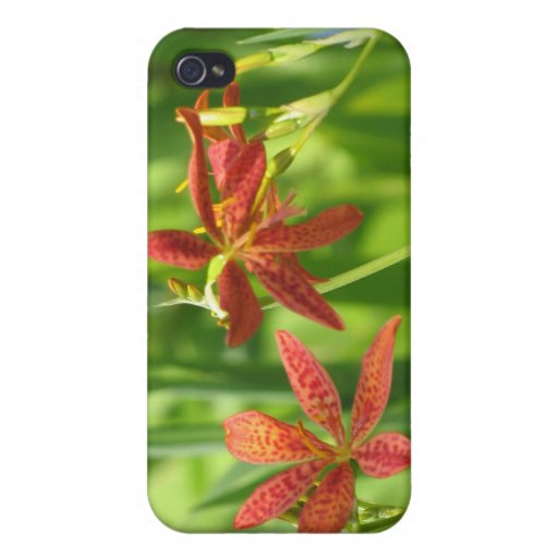 Blackberry Lilies. Case For iPhone 4