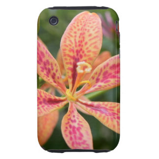 Blackberry Lily Tough iPhone 3 Cases
