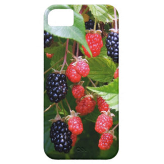 Blackberry Patch iPhone 5 Cover