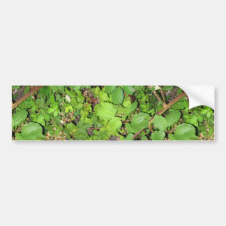 Blackberry vines berries leaves nature photo on bumper stickers