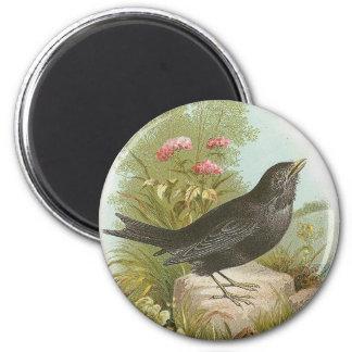Blackbird 6 Cm Round Magnet