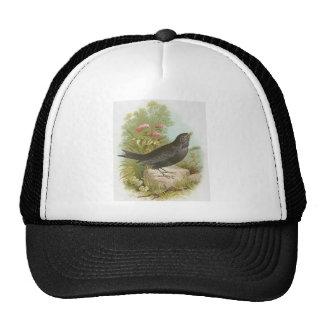 Blackbird Cap