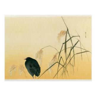 Blackbird, Edo Period Postcard