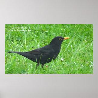 Blackbird image for poster