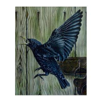 Blackbird in Flight Acrylic Wall Art