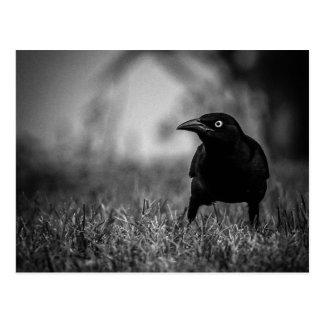 Blackbird in Grass Postcard