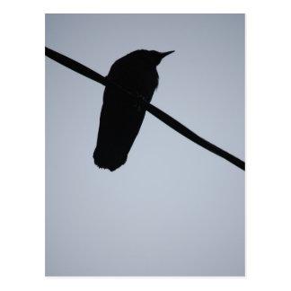 BlackBird on a Wire Postcard