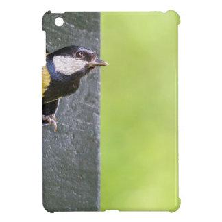 Blackbird parent in hole of nest box case for the iPad mini